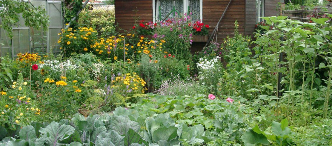 Ein klassischer Kleingarten mit allerlei Nutzpflanzen - Foto: Thomas Wagner BDG