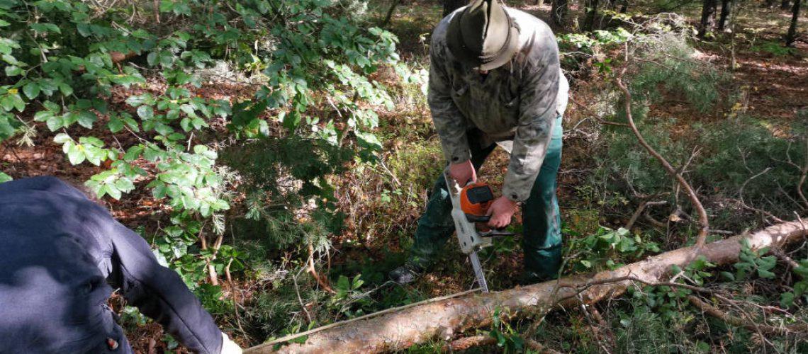 Forstwirtschaftsmeister Michael Maaß setzt die Motorsäge an und zerkleinert die Lärche.