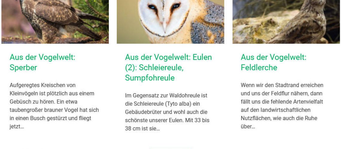 homepage-pc-screenshot2