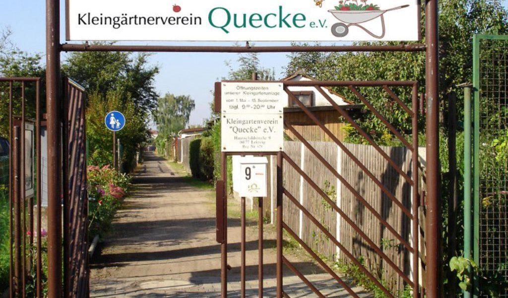 kgv-quecke