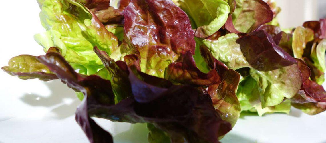 oak-leaf-lettuce-3450388_1280