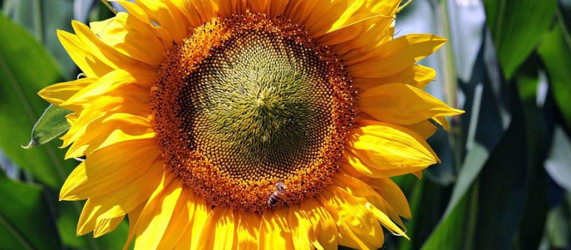 Bild von S. Hermann & F. Richter auf Pixabay